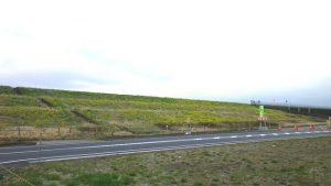 江戸川沿いもやっと春が近づいてきている